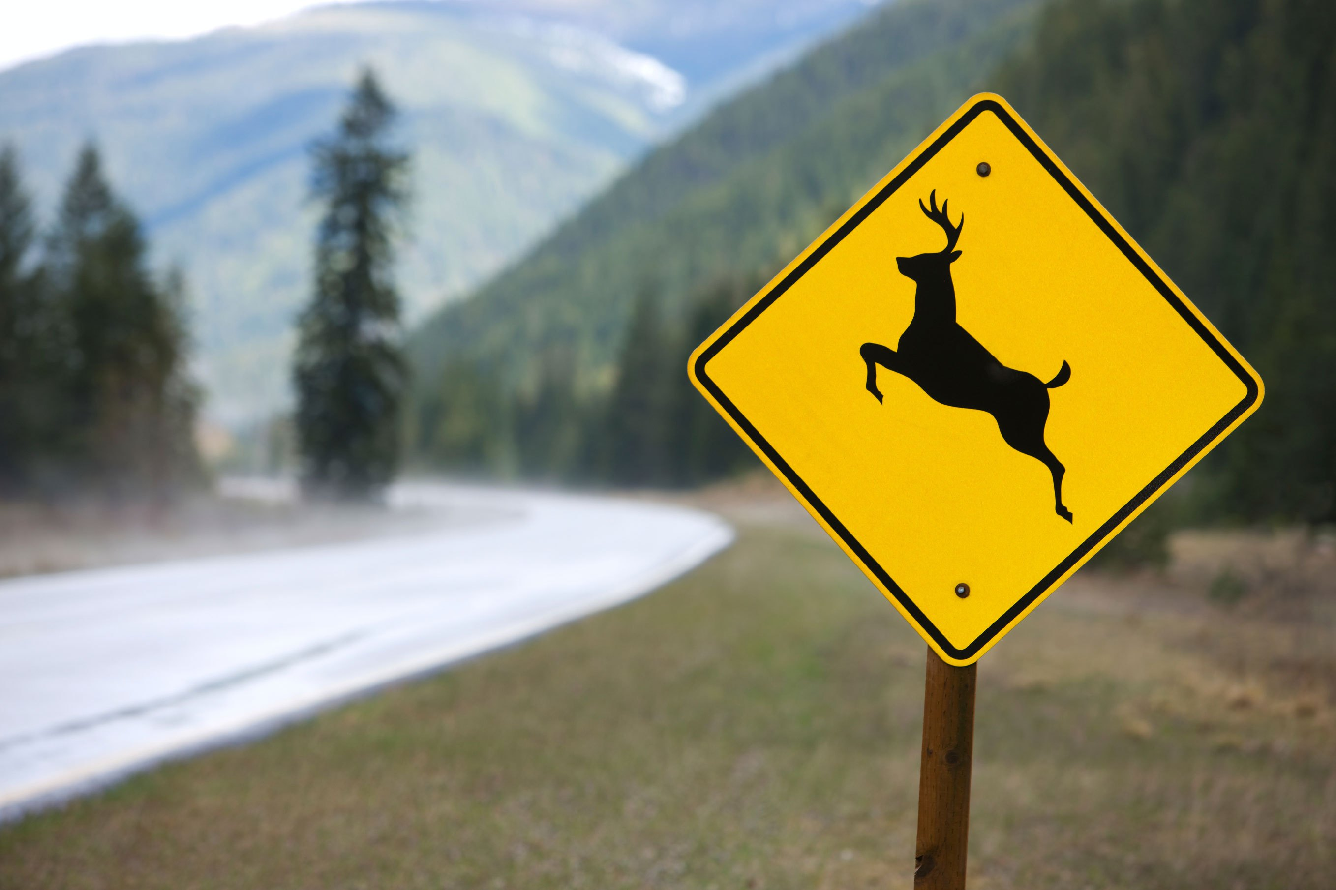 Deer Crossing Sign with blurry background