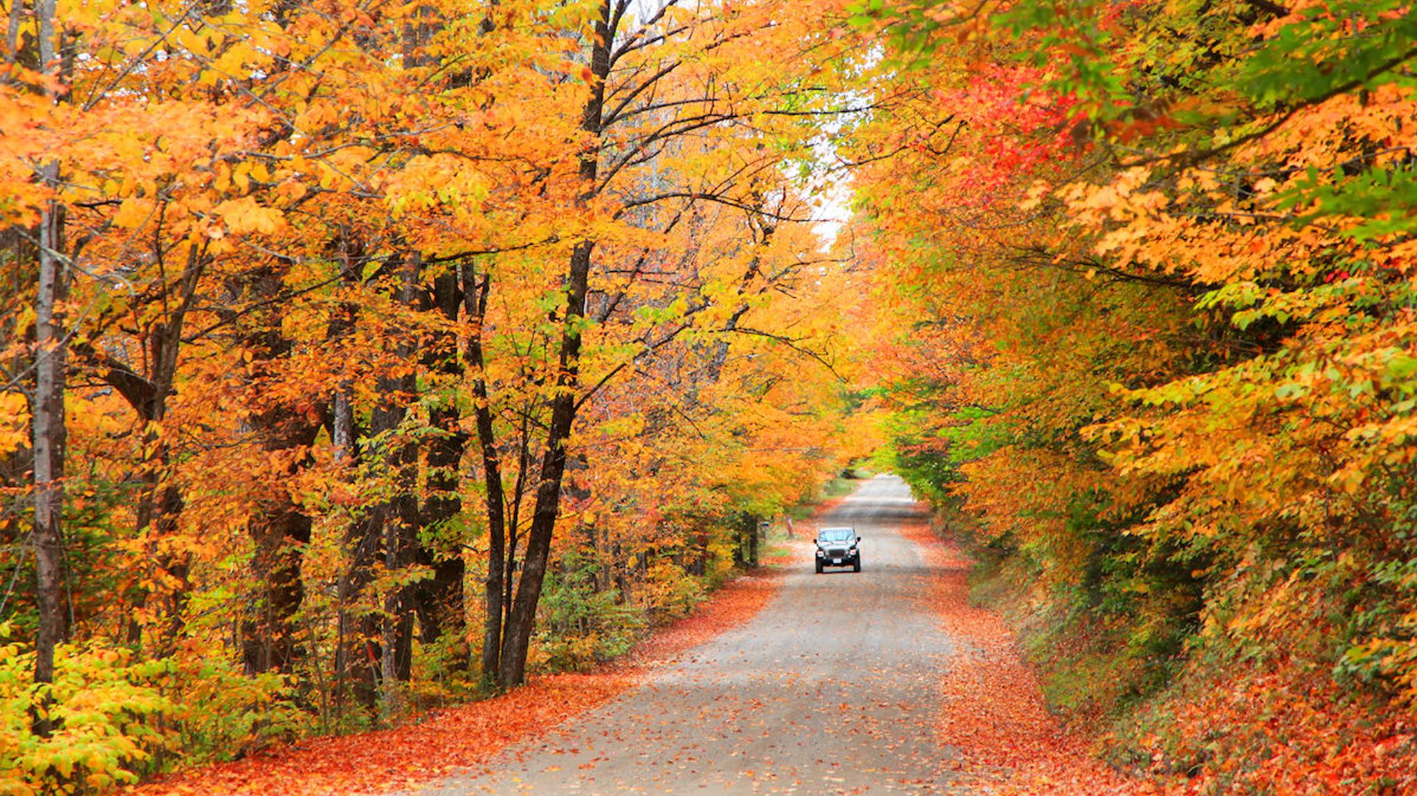 Wrangler In Fall Foliage